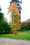 Autumn colours at Westonbirt