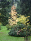 Bright colours at Westonbirt