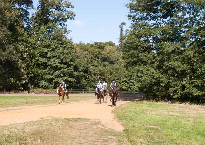 Horse riders Windsor Great Park